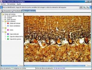 atlas-interactivo-de-histologia-u-de-oviedo.jpg