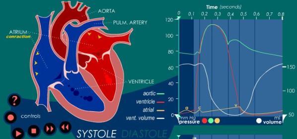 ciclo-cardiaco-animado.JPG